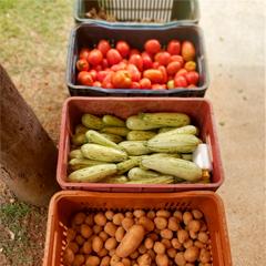 caixas com verduras e legumes organicos