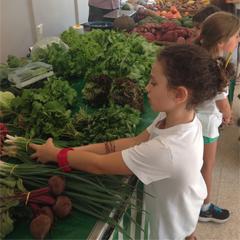 feira organica